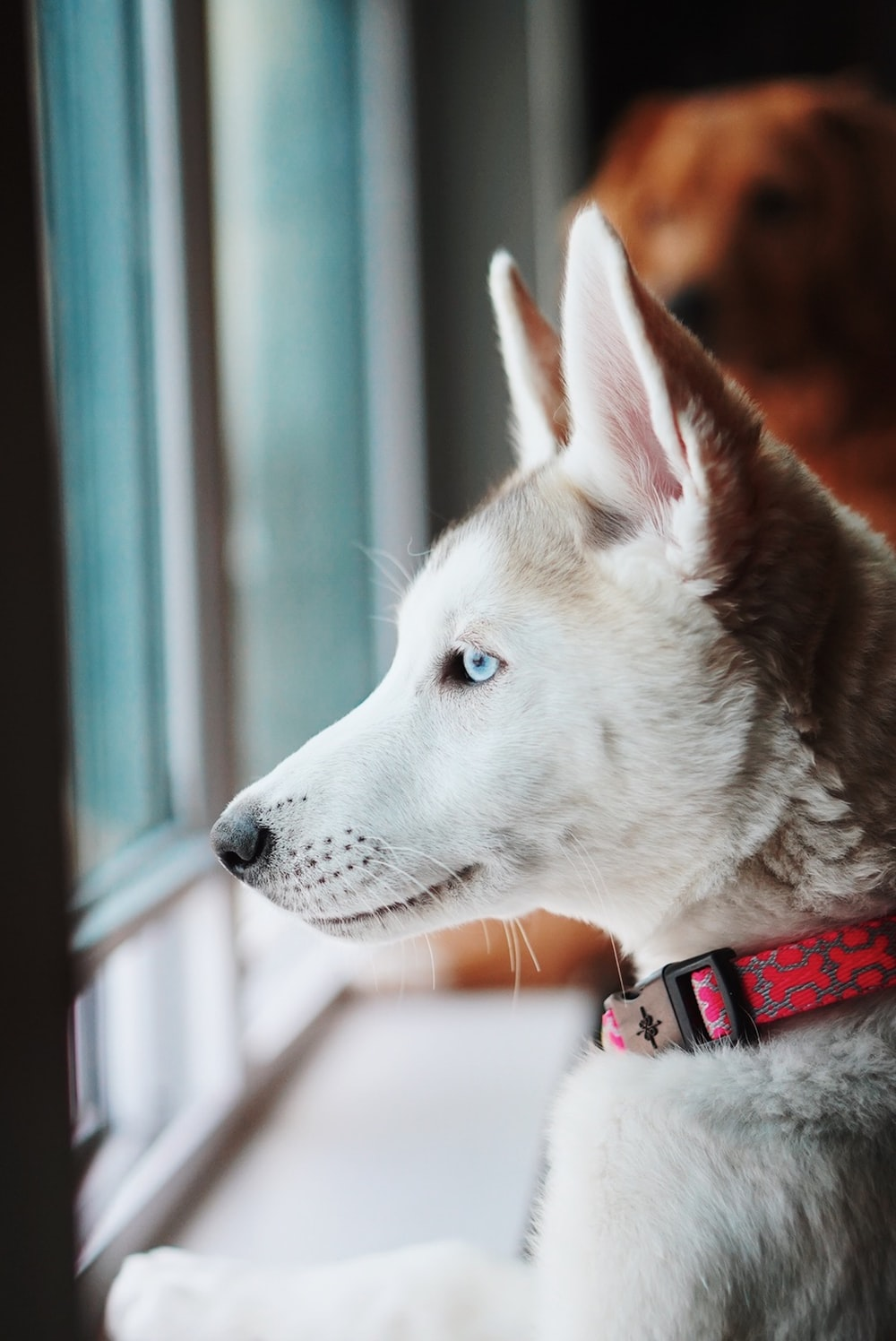dog standing by the window