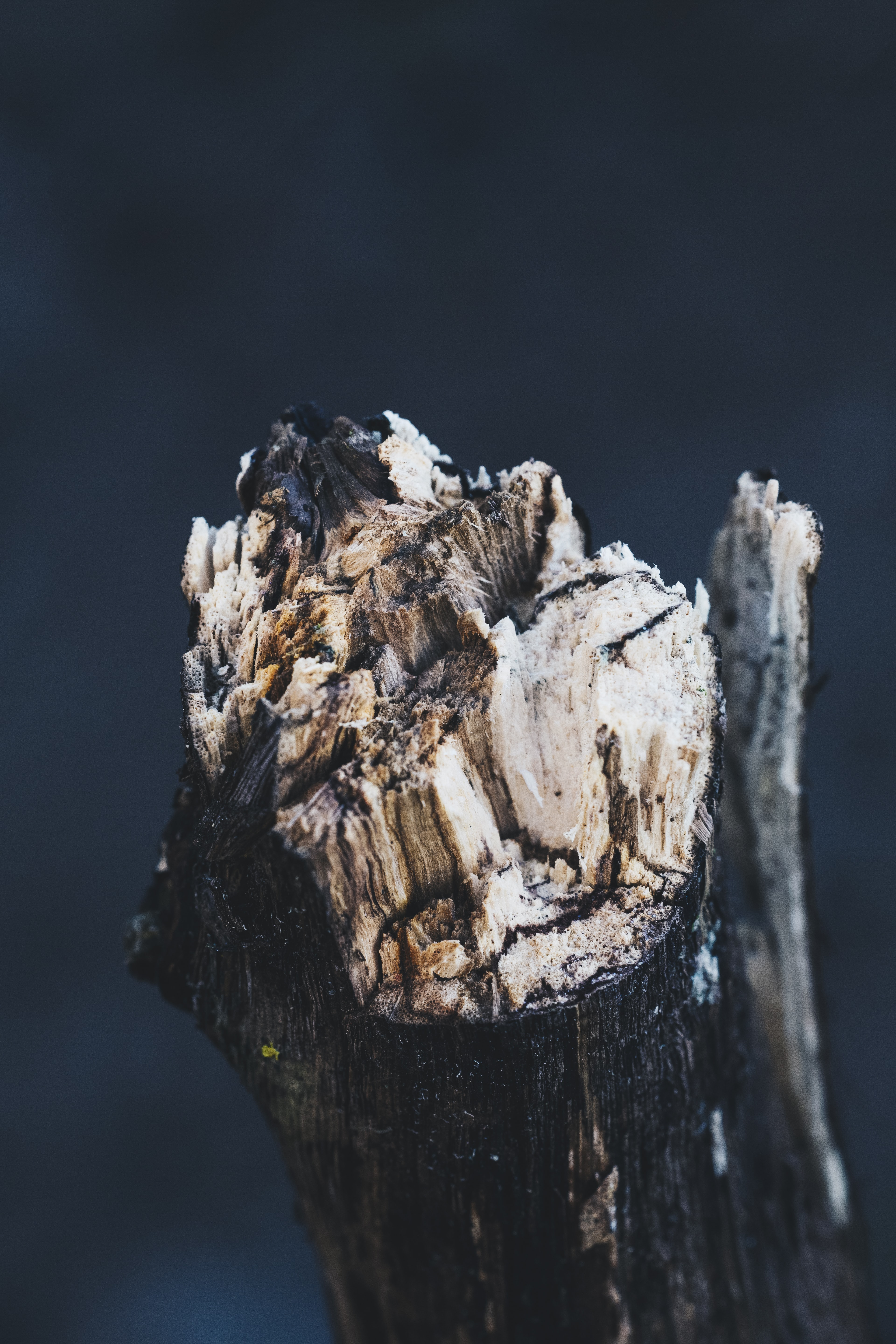 shallow focus photo of tree branch