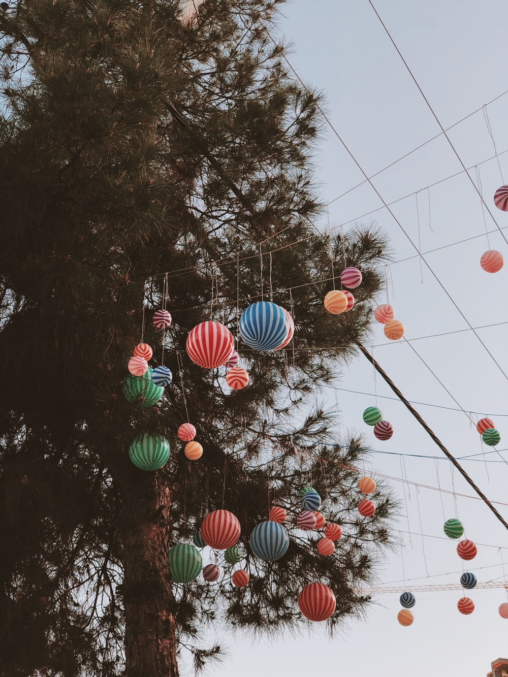 paper lanterns decorations by tree