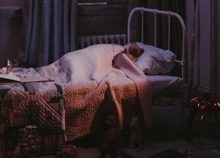 bear on bed inside room