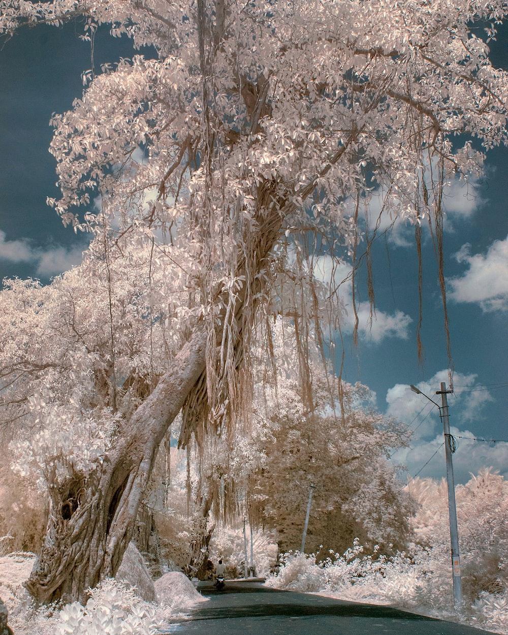 concrete road beside white-petaled tree