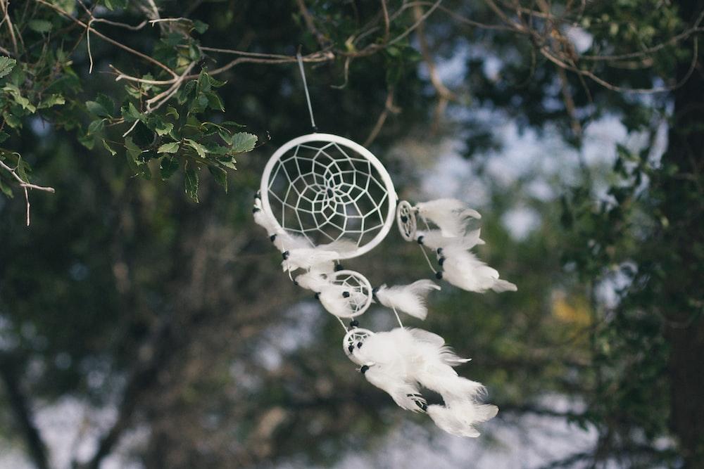 white dream catcher hanged on a green vine