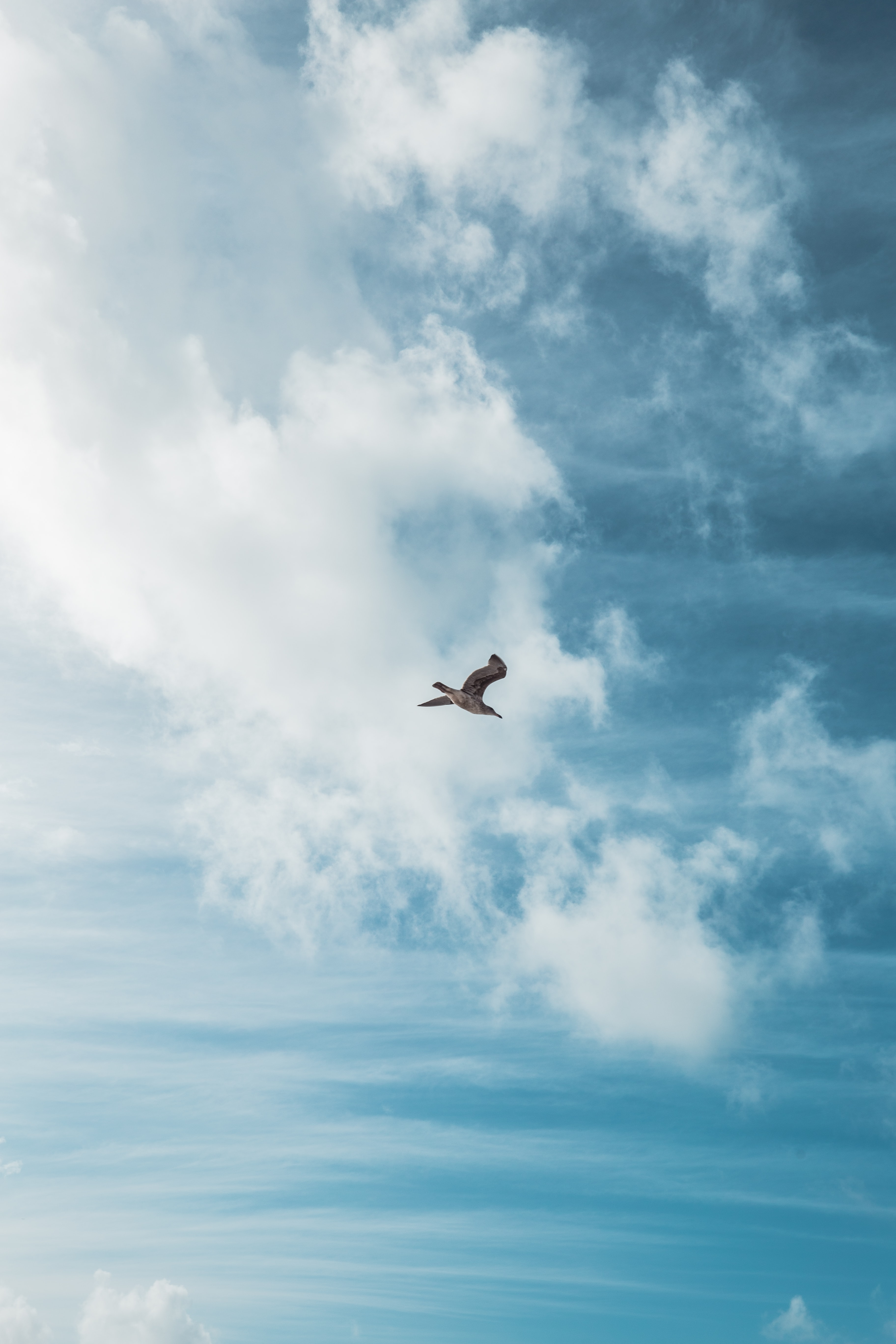 bird flying on the sky with white clouds during daytime