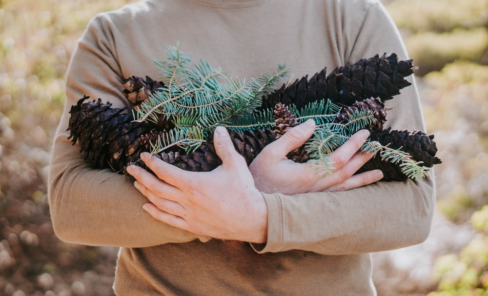 person holding bunch of pine cones