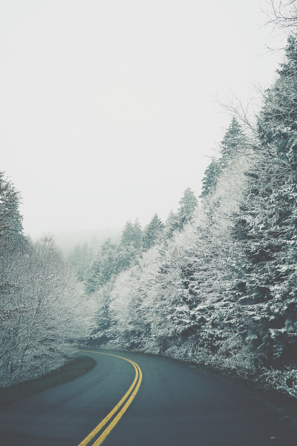 road between snow-covered trees during daytome