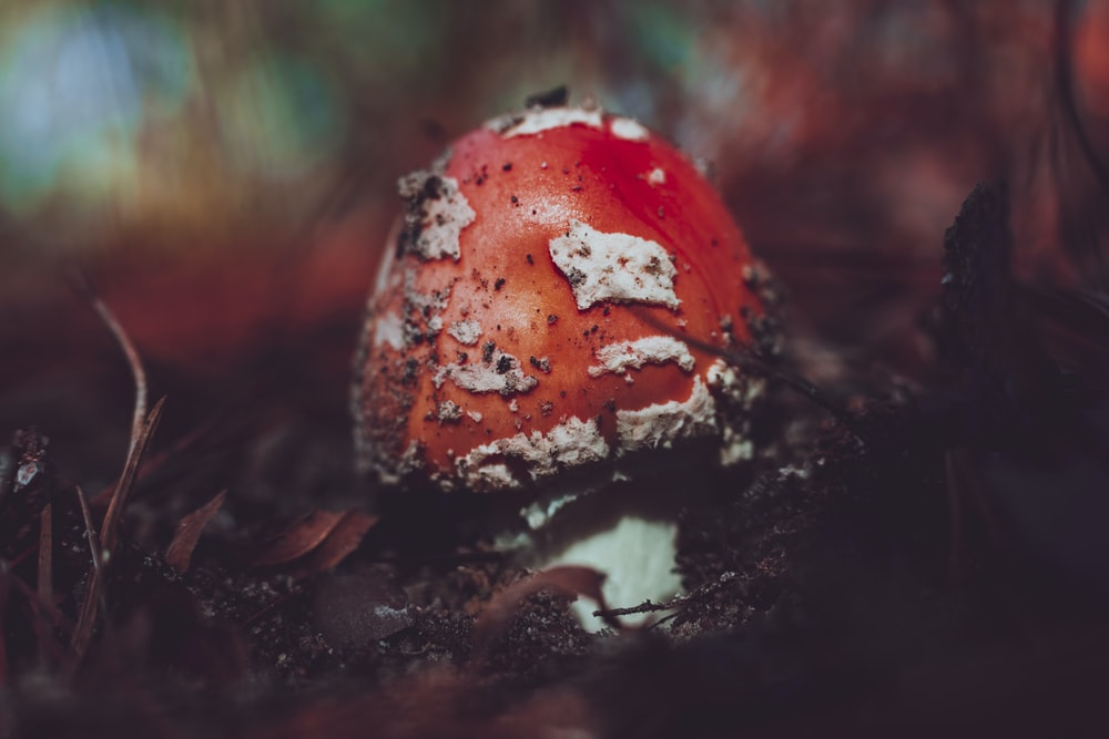 selective focus photography of red fungus