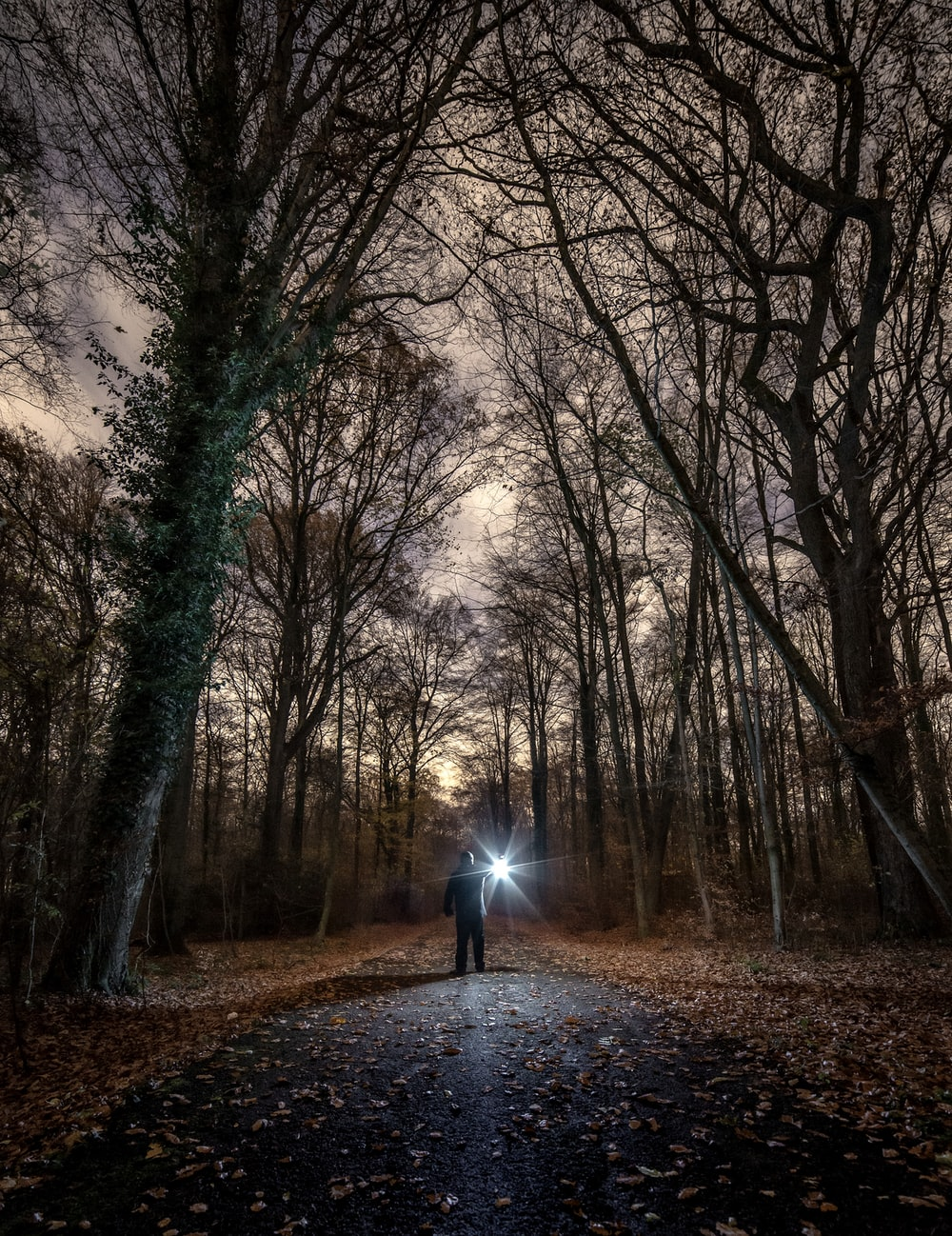 silhouette of person holding flashlight surrounded by withered trees
