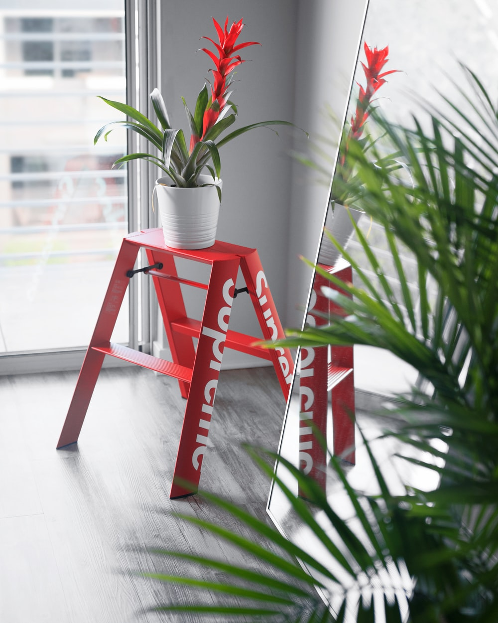 red potted plant on orange ladder