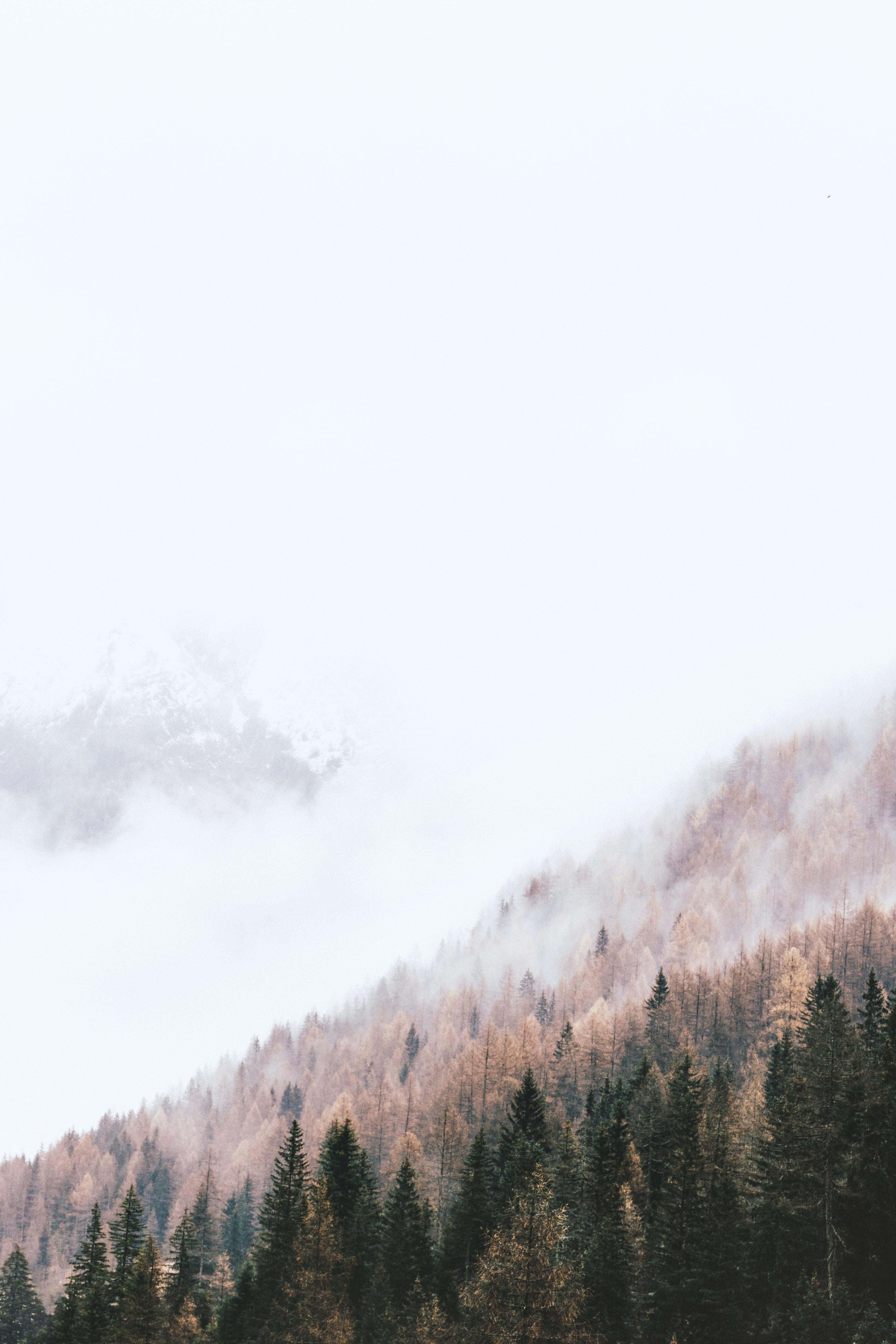 high-angle photography of pine trees