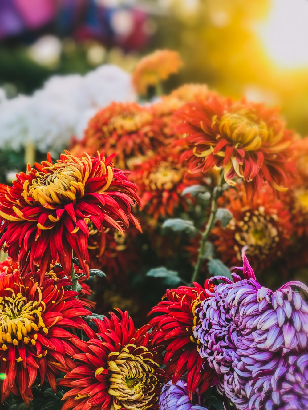 orange and red petaled flower closeup photography