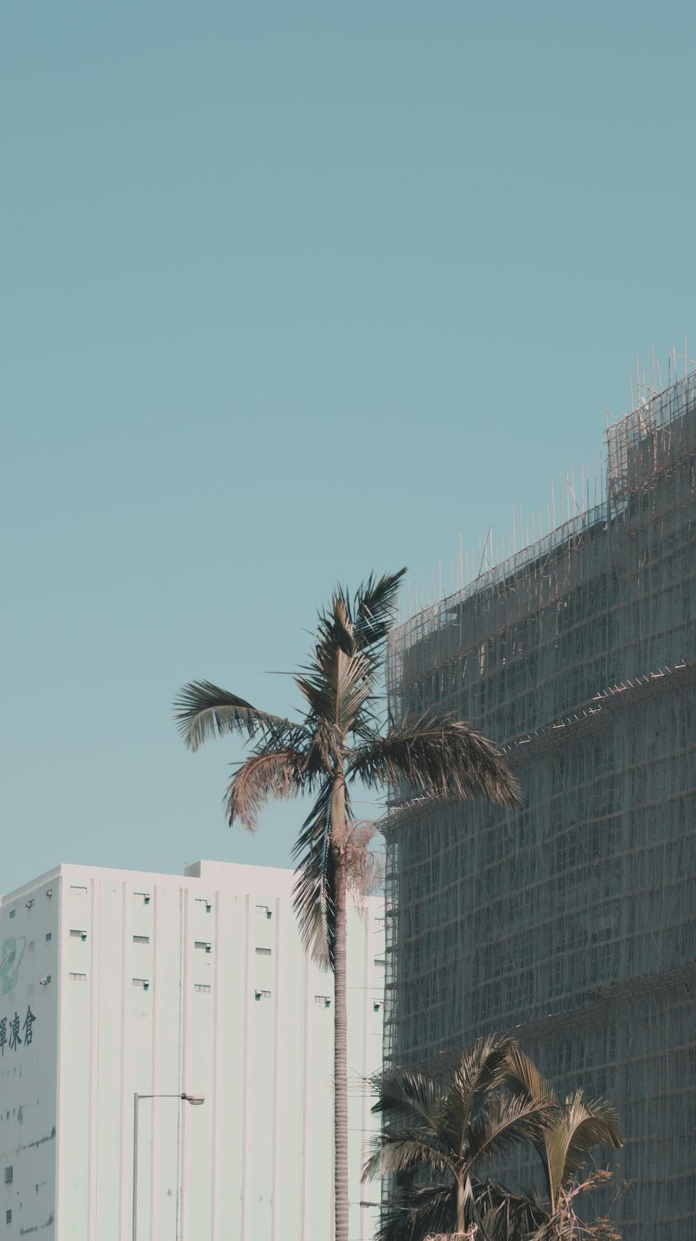 coconut tree near building