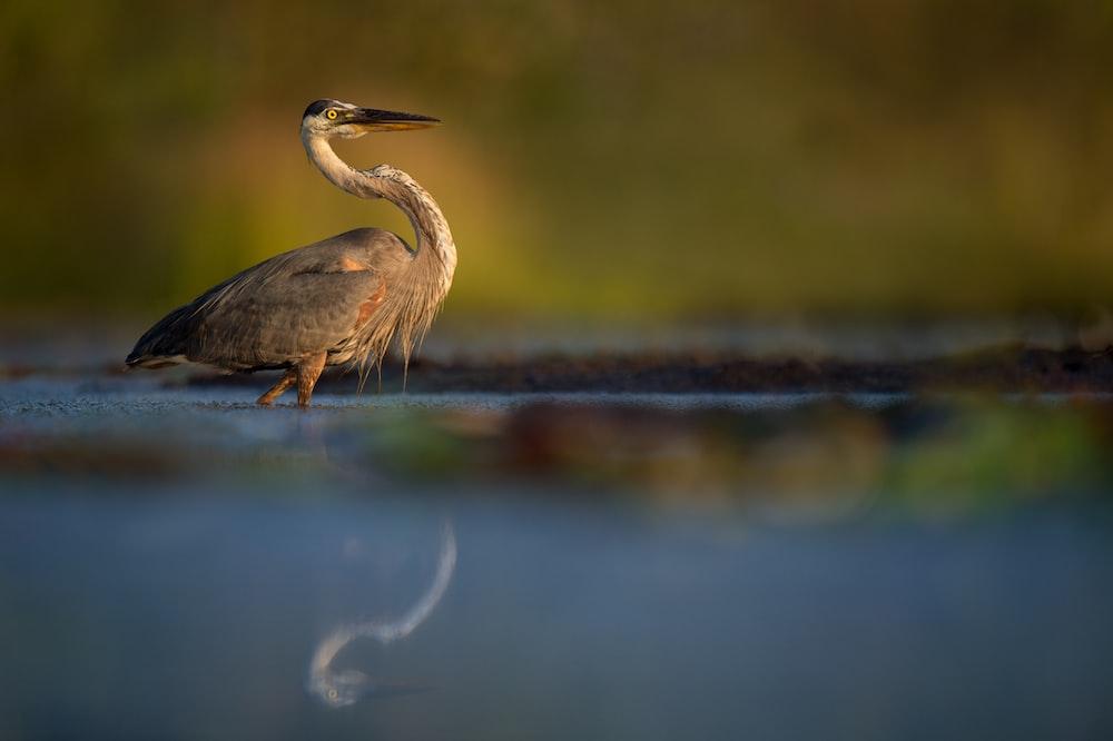 Brown Stork Pictures   Download Free Images on Unsplash