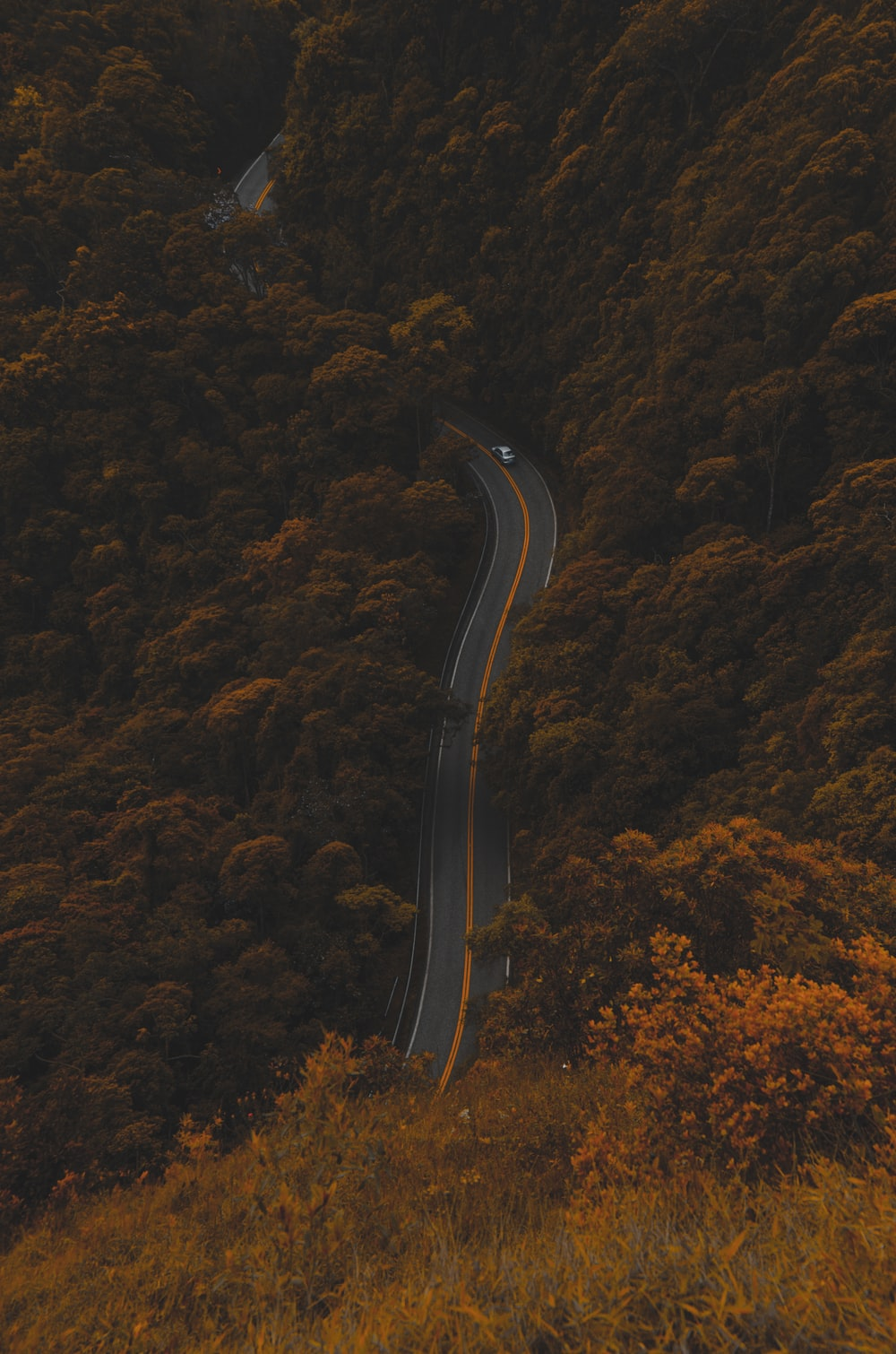 high-angle photography of road between trees