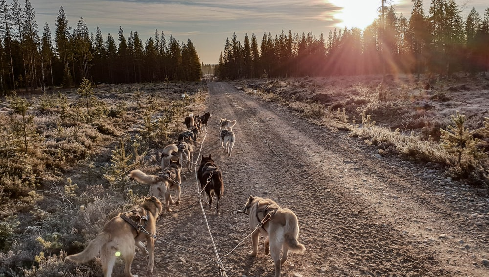 pack of dogs walking towards trees during daytime