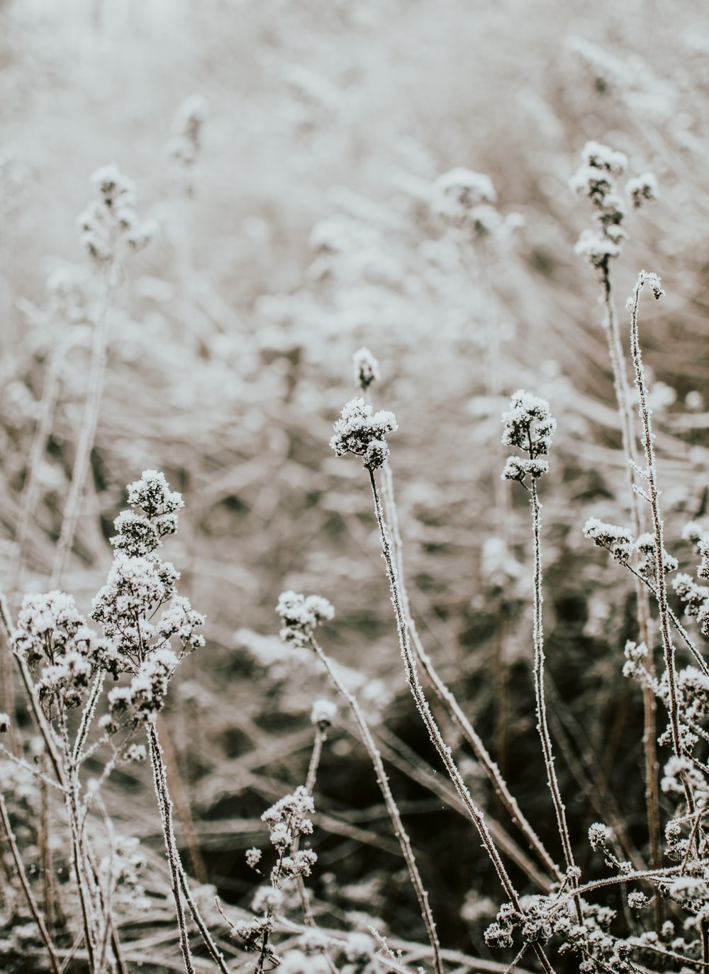 snow covered plant during daytime