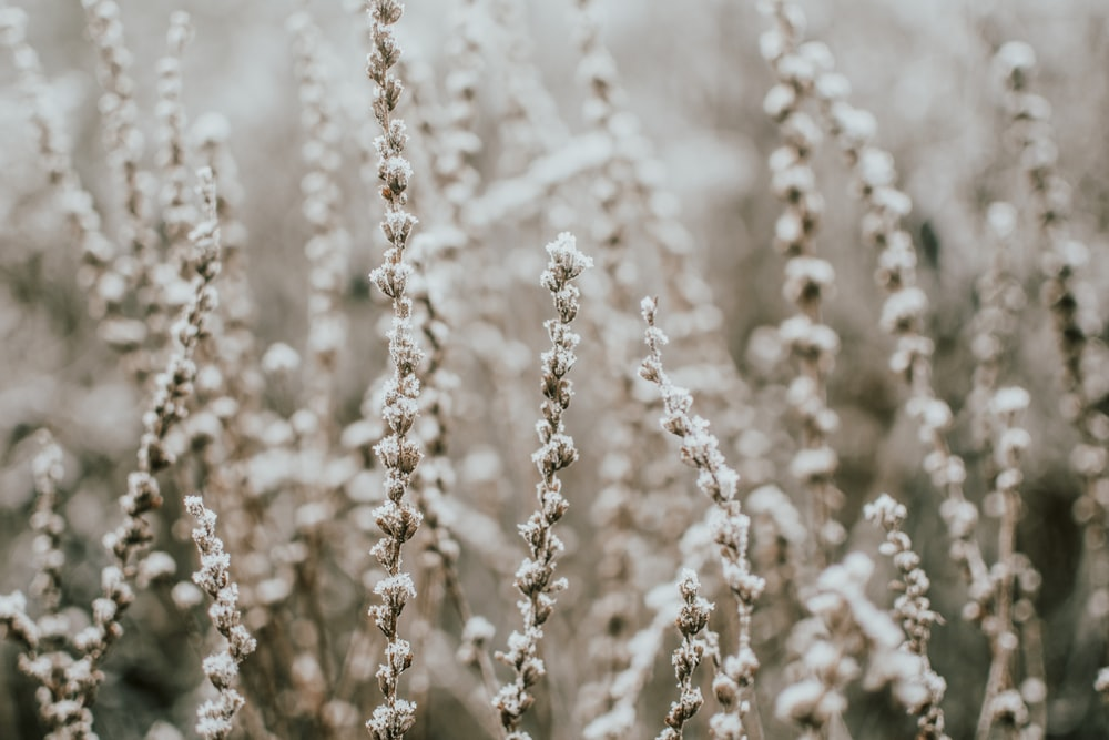 focus photography white grass