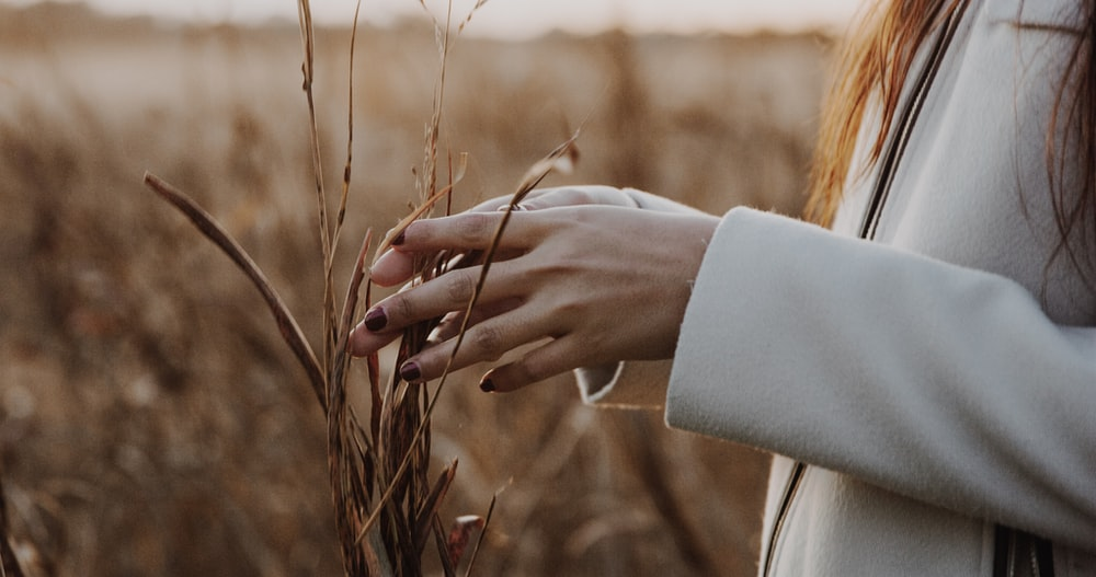 person touching dried leaves