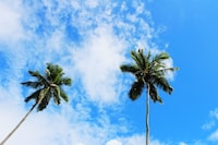 green and blue palm trees