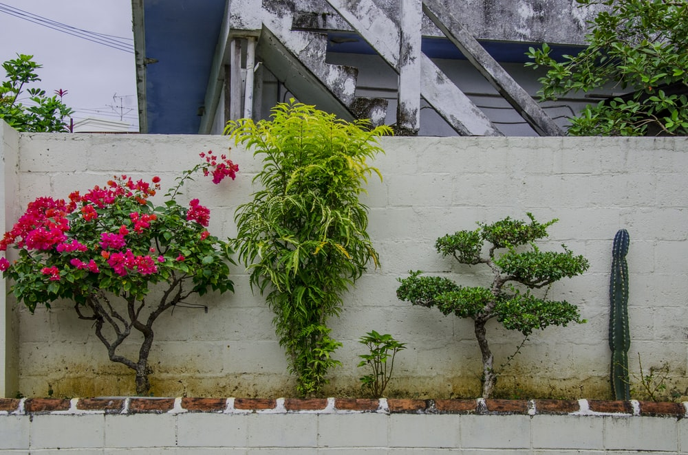 assorted plants near white concrete wall