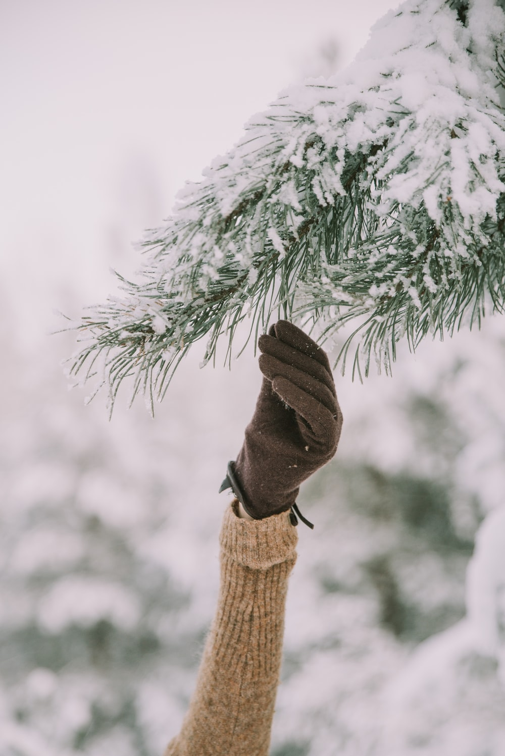 person holding pine leaf covered with snow during daytime
