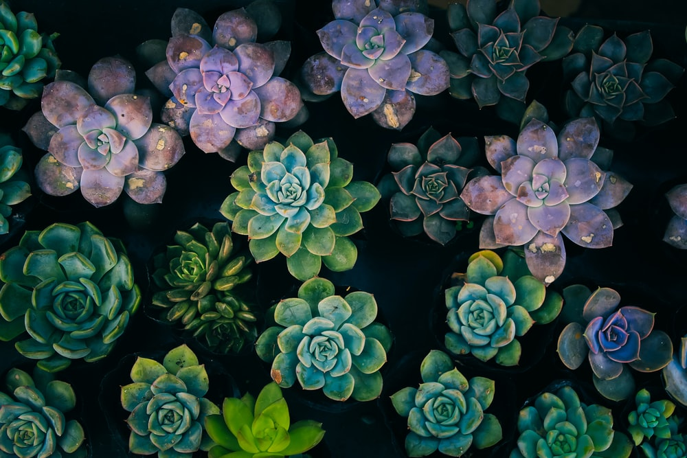 high-angle view of succulent plants