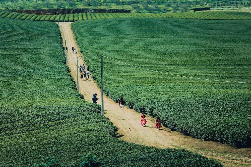 people walking on road near green field