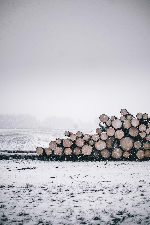 pile of logs during winter season