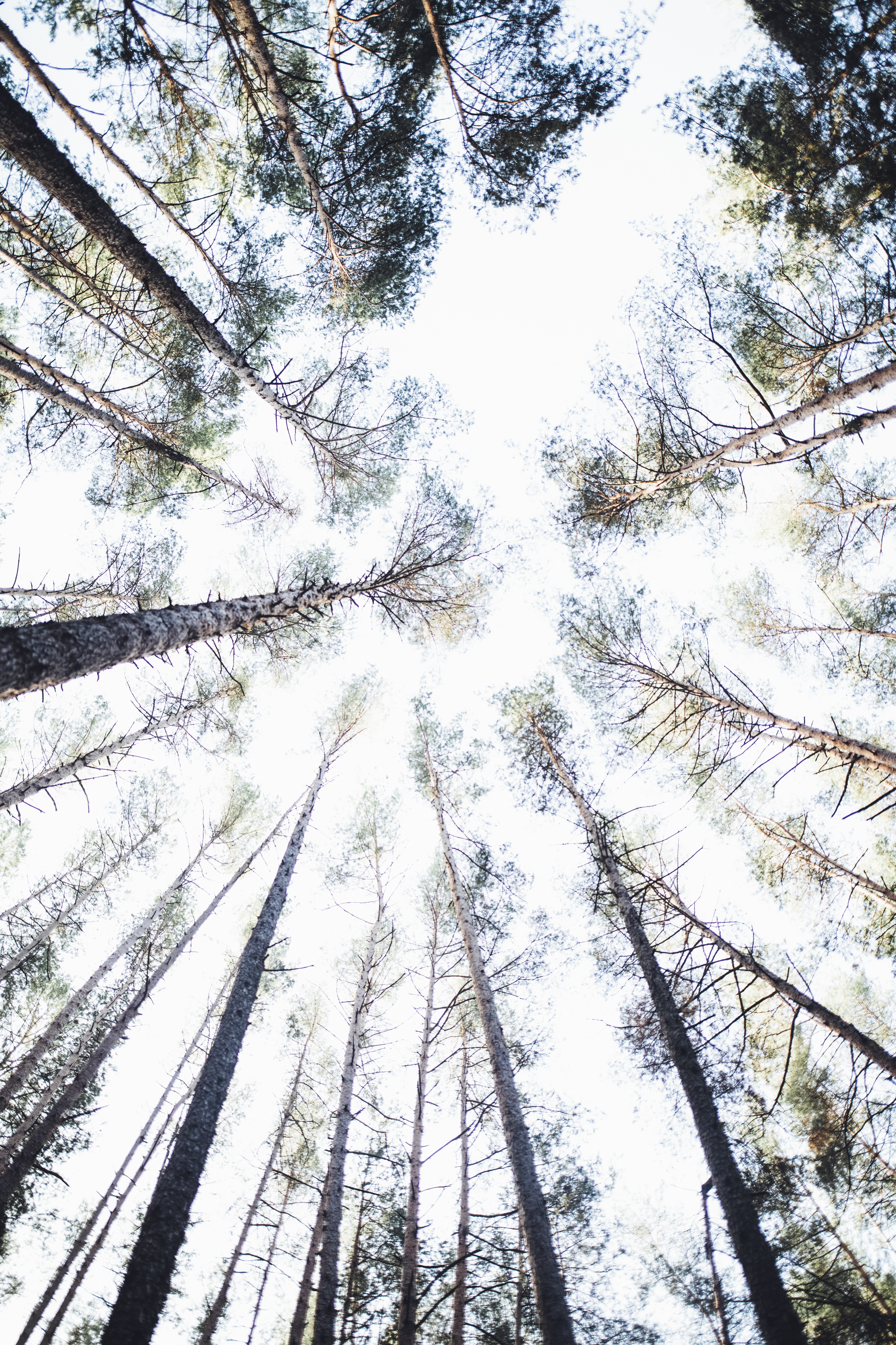 shallow focus photography of tall trees at daytime