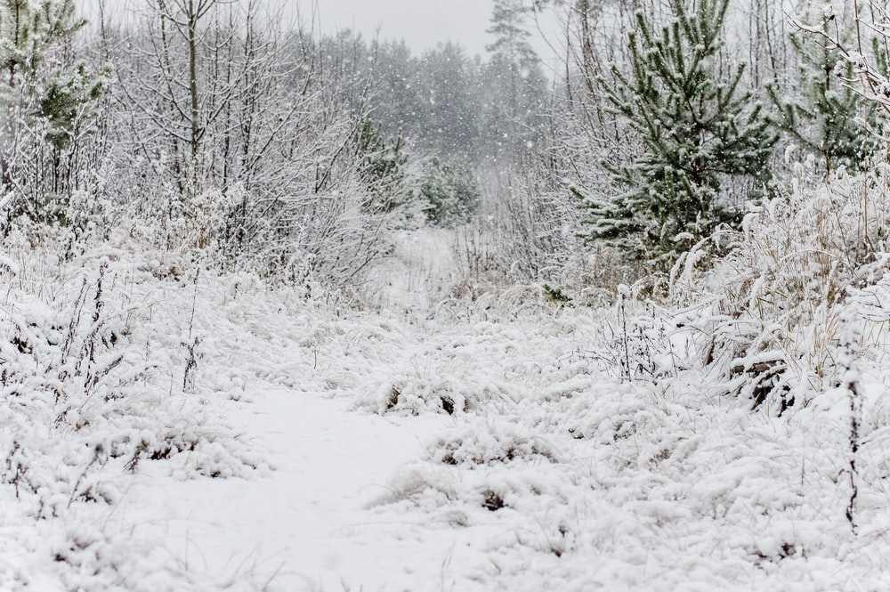 snow covered grass and trees at daytime
