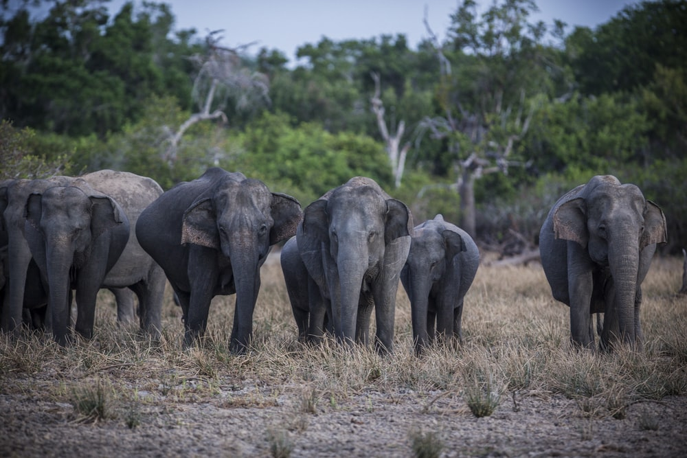 herd of elephants on green grass