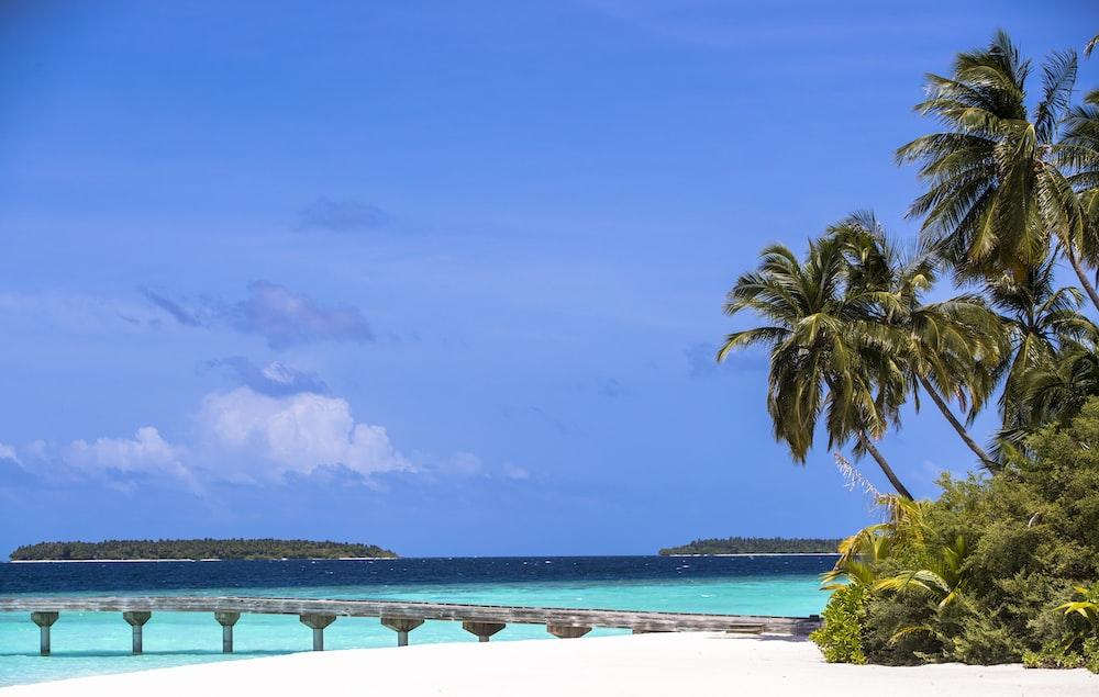 green palm trees on sand beach