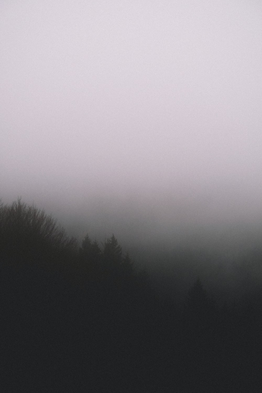 silhouette of trees with fog
