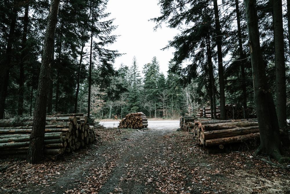 piles of logs along dirt pathway near highway