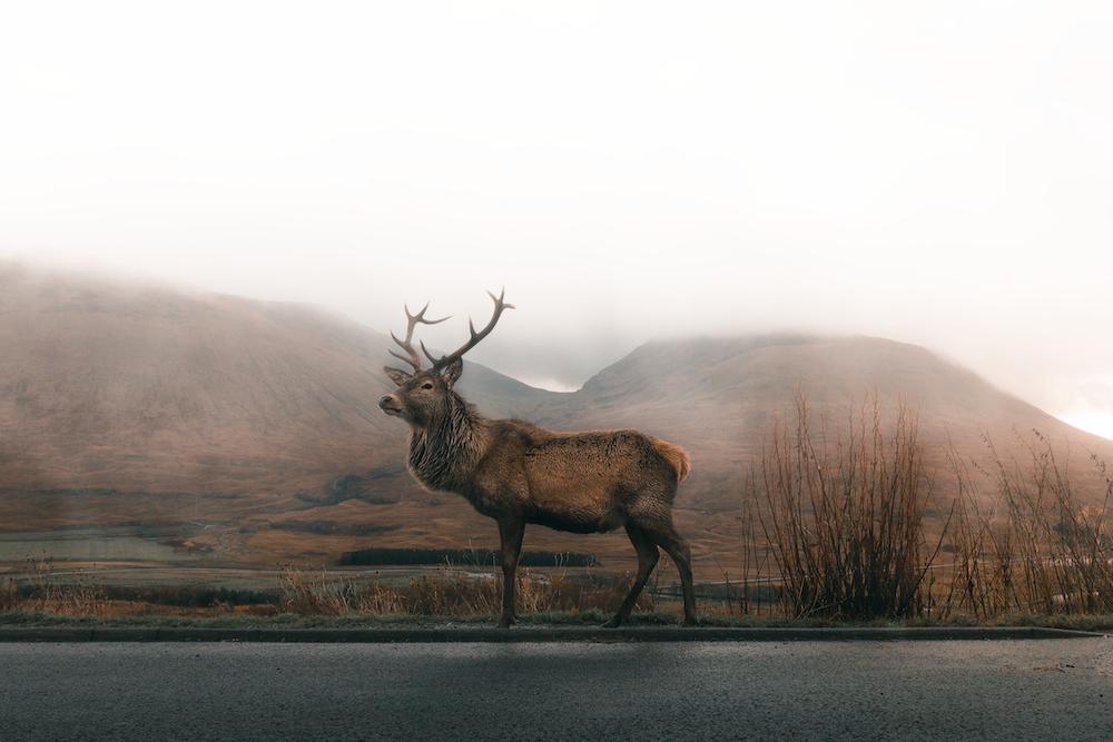 brown deer on road under gray sky