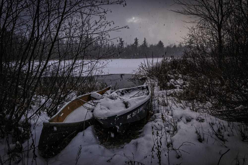two black and brown canoes near trees