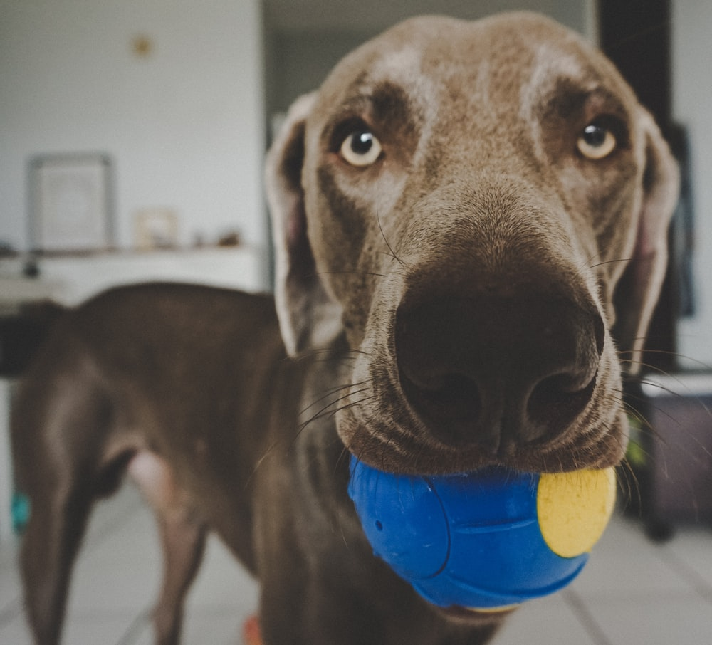 selective focus photography of dog face