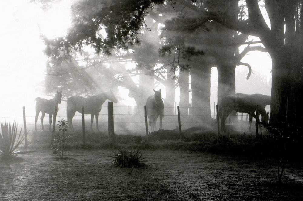 grayscale photography of herd of horse on grass field
