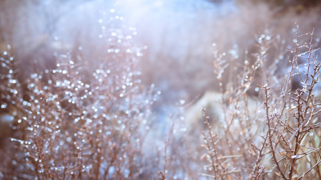 Melting snow droplets on twigs and branches looks enchanted in the morning sun.