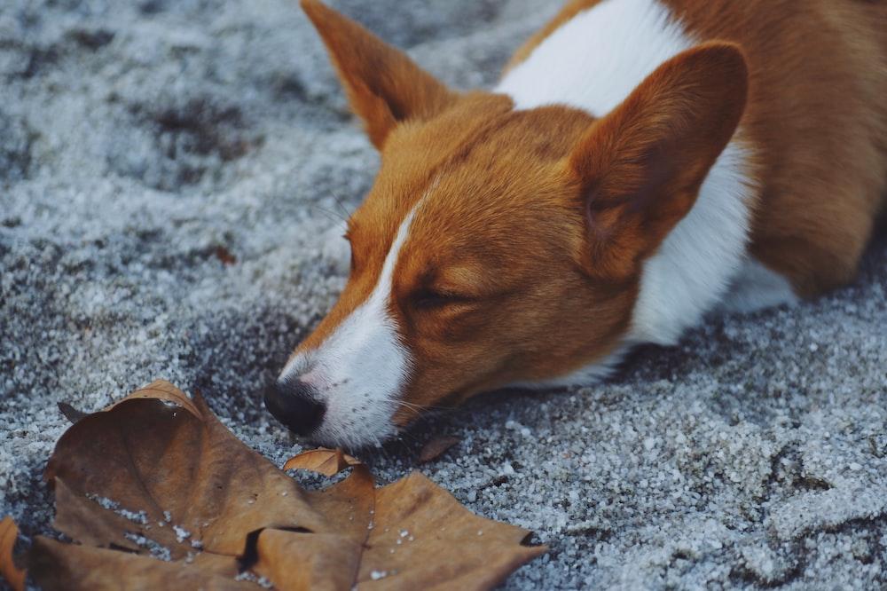 dog lying on snowfield