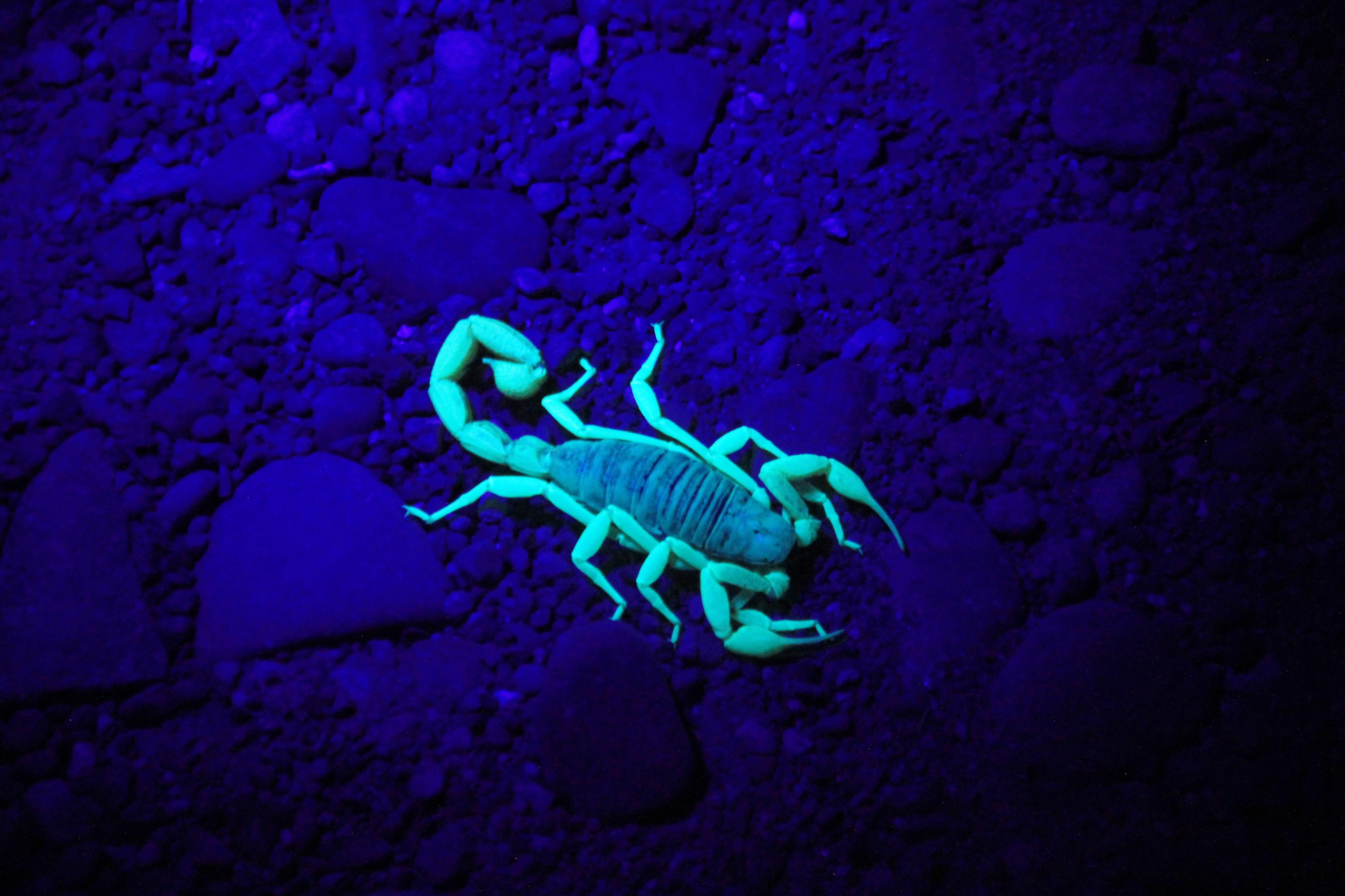 green scorpion on ground