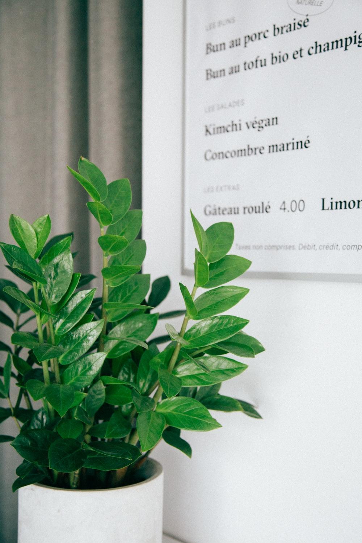 green leafed plant on white plant ot