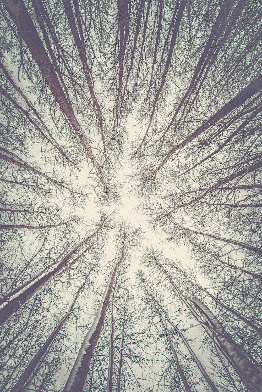 worm's-eye view tree
