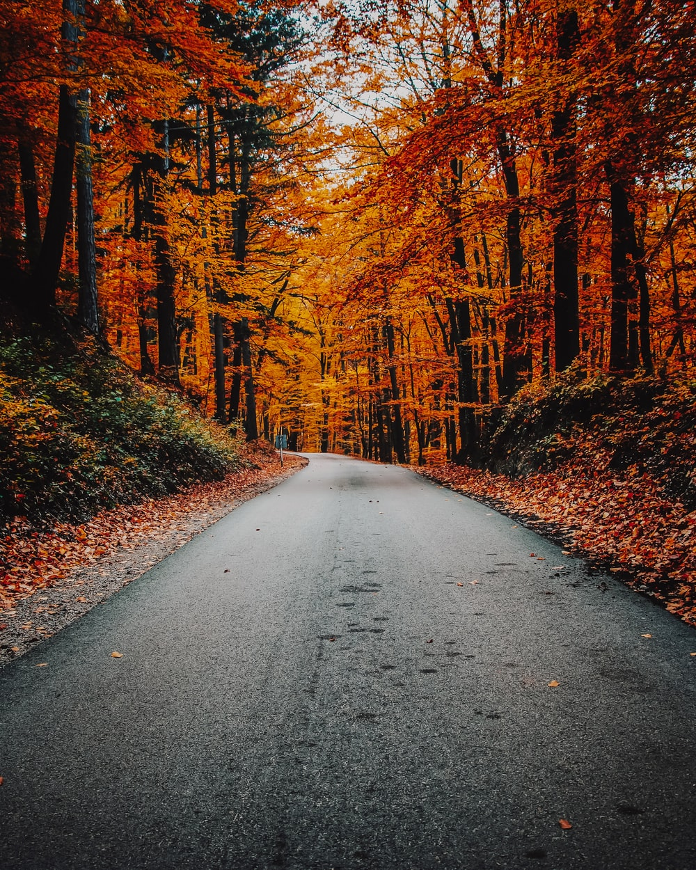 concrete road in forest