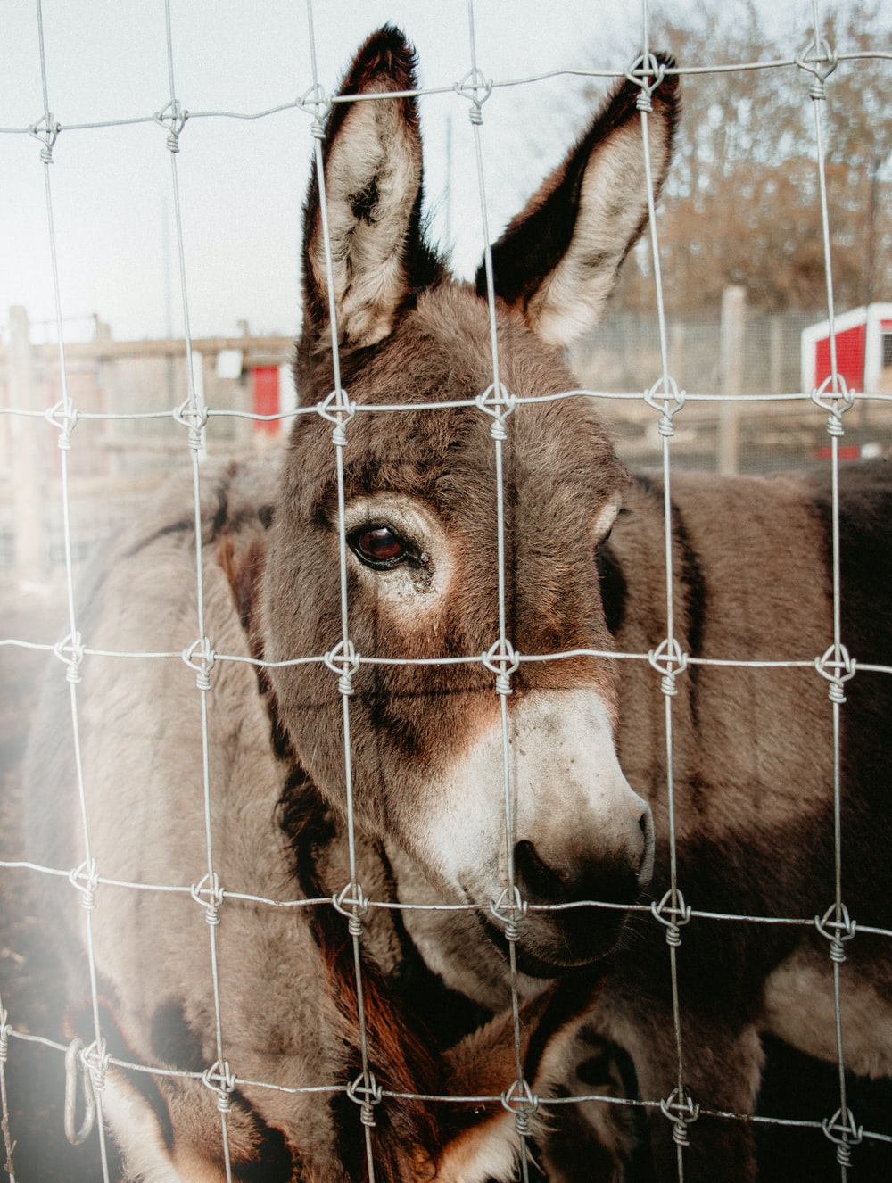 donkey in cage