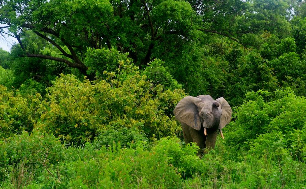 gray elephant near trees during daytime