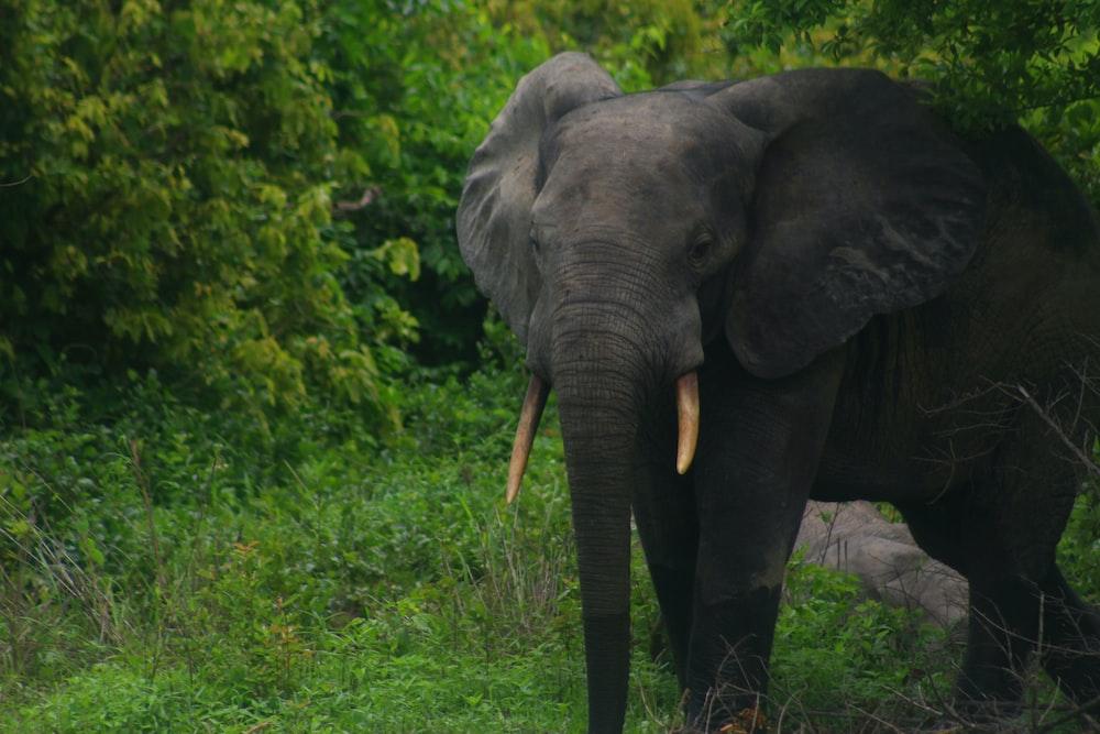 brown elephant on green grass near trees