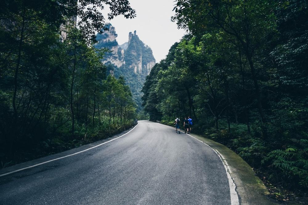 bike beside road between trees