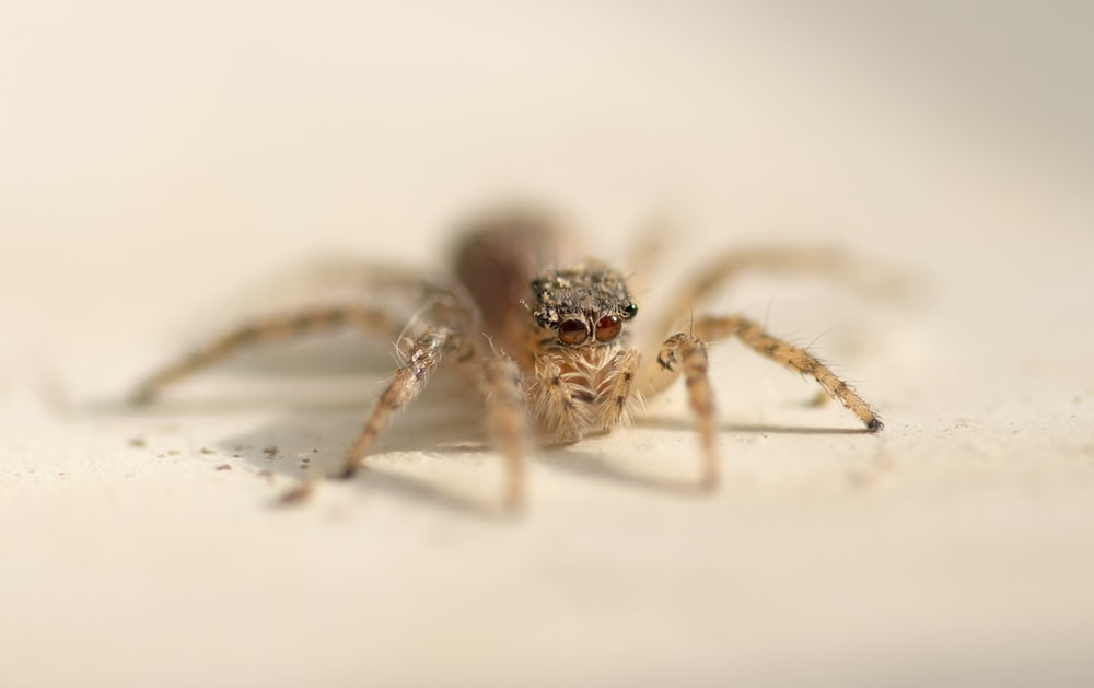 brown spider on white wall
