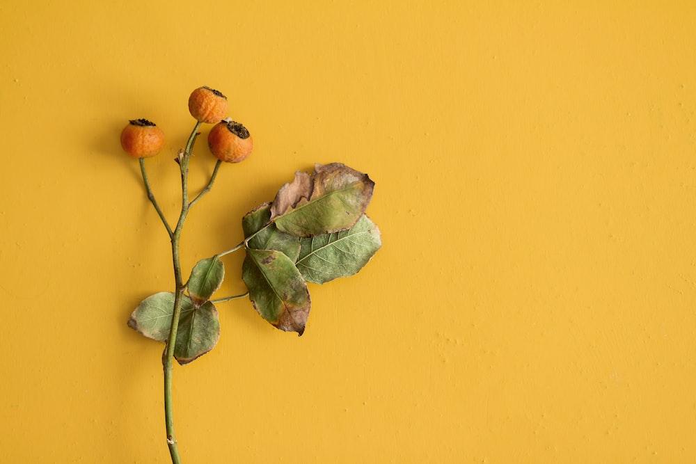 three orange flowers on yellow wall