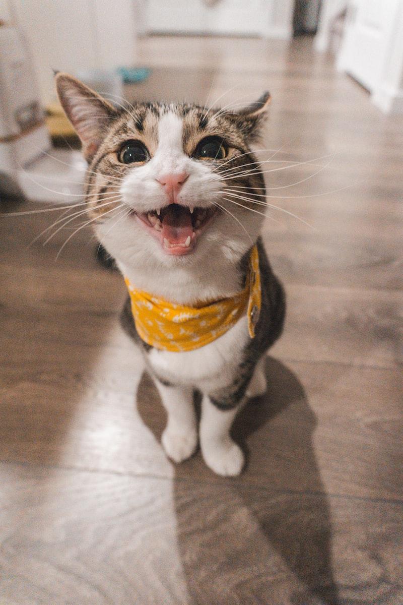 寵物 動物傳心 寵物溝通 貓 ISAC